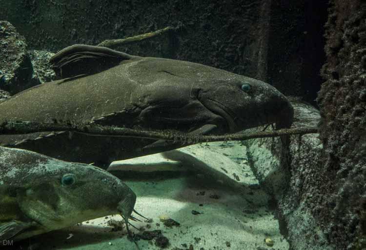 Bolton Aquarium