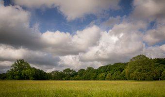 Meadow, Lever Park, Rivington