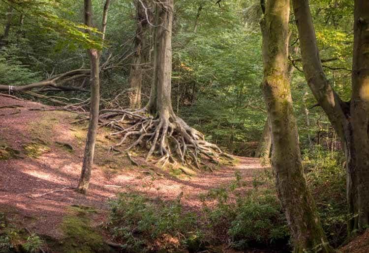 Ravenden Planation, Smithills Country Park, Bolton