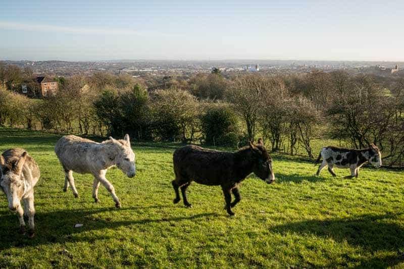 Donkeys at Smithills Open Farm