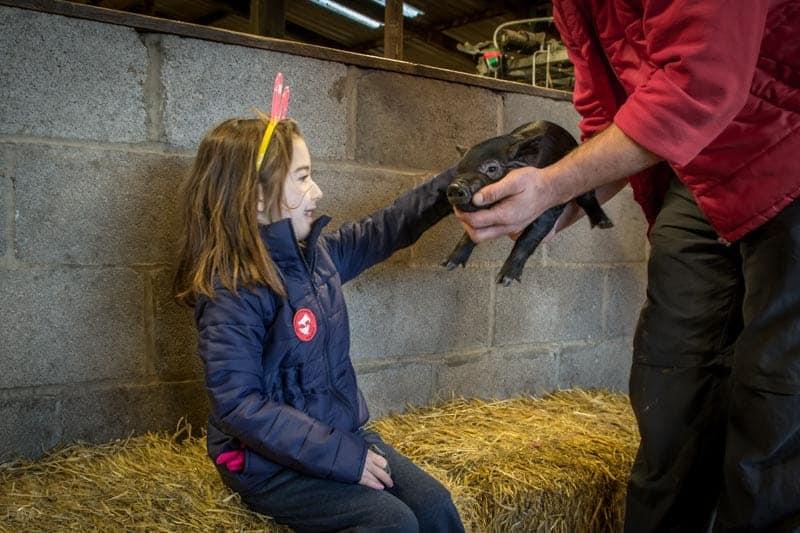 Pets Corner - Piglet at Smithills Open Farm