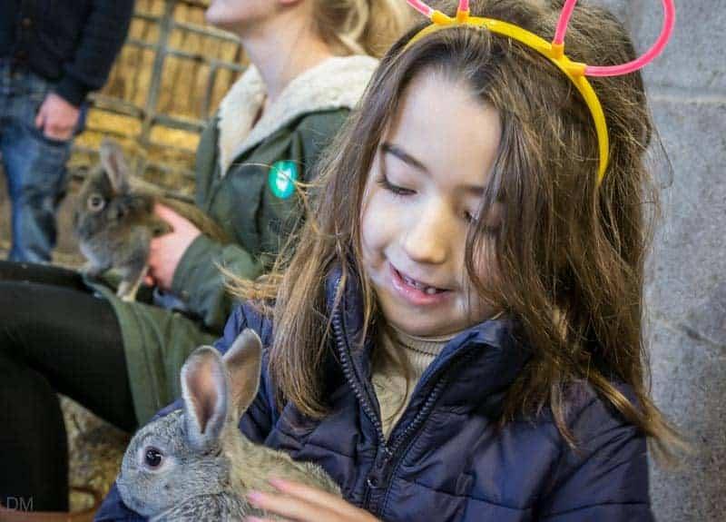 Child holding a rabbit