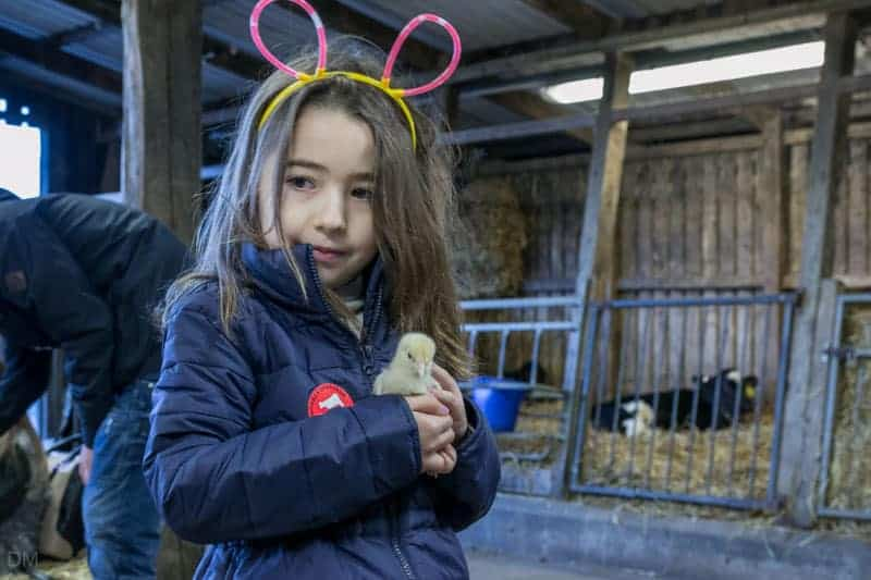 Girl holding a chick at Smithills Open Farm