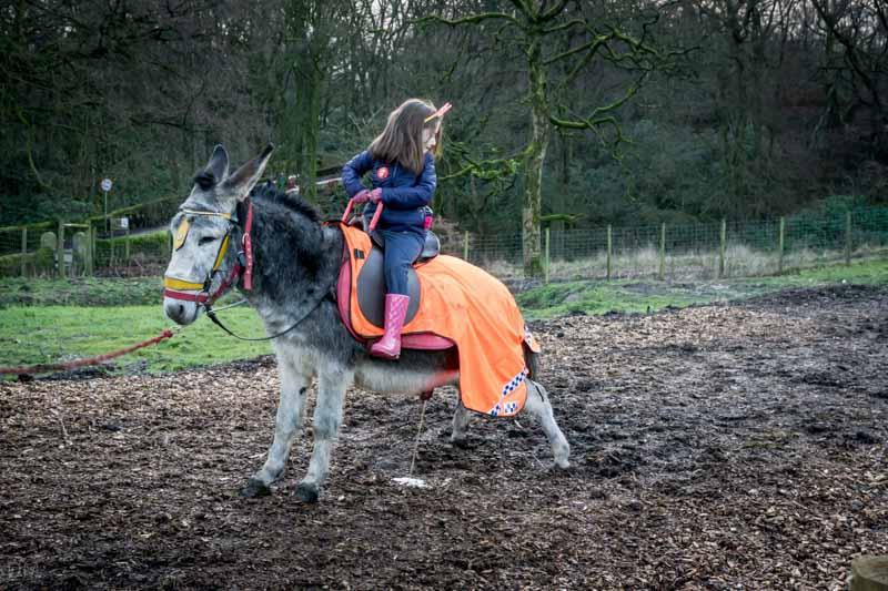 Child riding a donkey