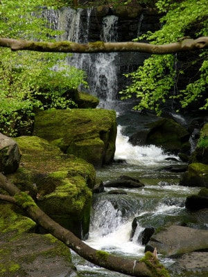 Healey Dell Nature Reserve