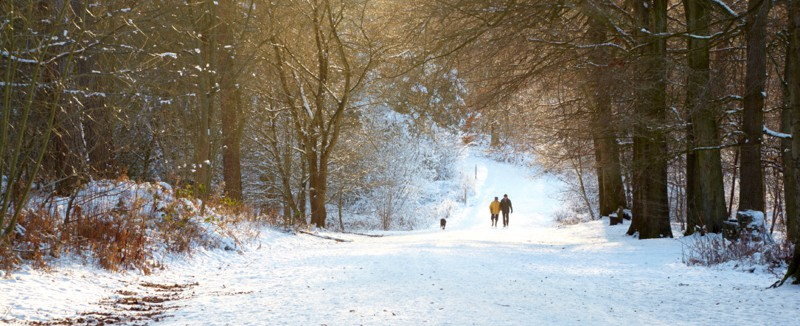 Couple walking through a snow-covered Delamere Forest