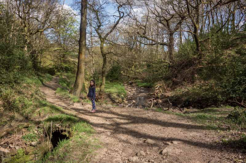 Buckden Wood, National Trust, Holcombe Moor