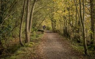 Woodland at Pennington Flash