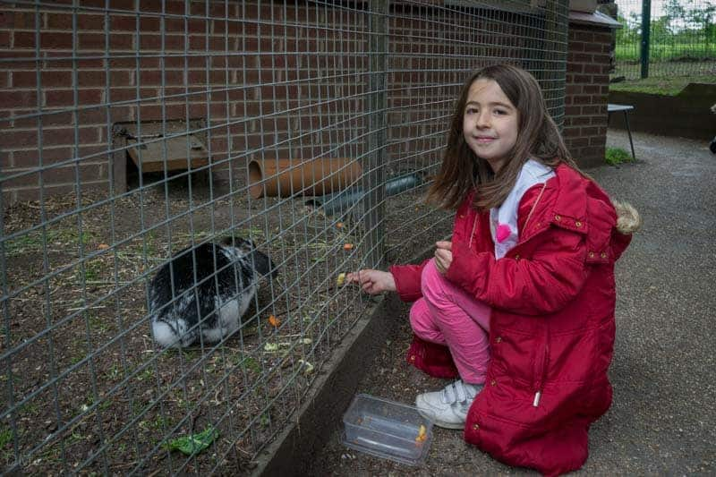 Girl feeding a rabbit at Pets' Corner at Astley Park in Chorley, Lancashire