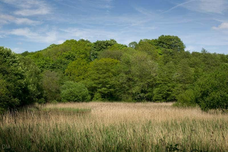 Top Lodge nature reserve at Yarrow Valley Country Park