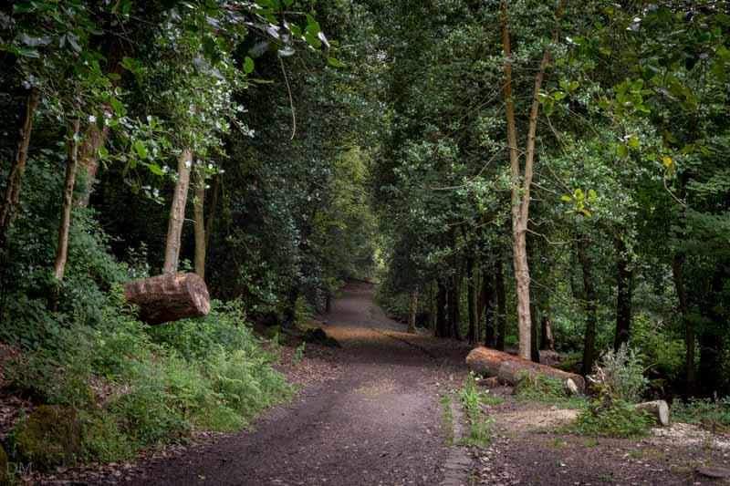 Woodland path, Bold Venture Park
