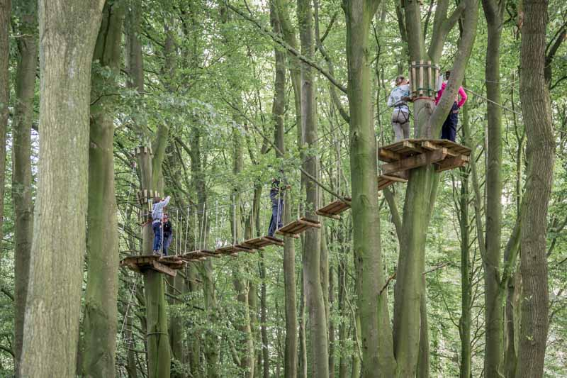 Treetop walkway at Go Ape in Rivington, Bolton