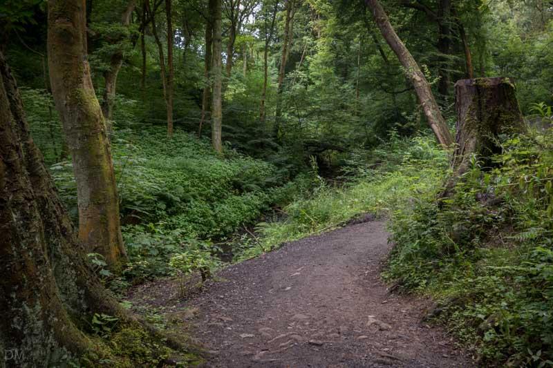 Woodland Path - Sunnyhurst Wood