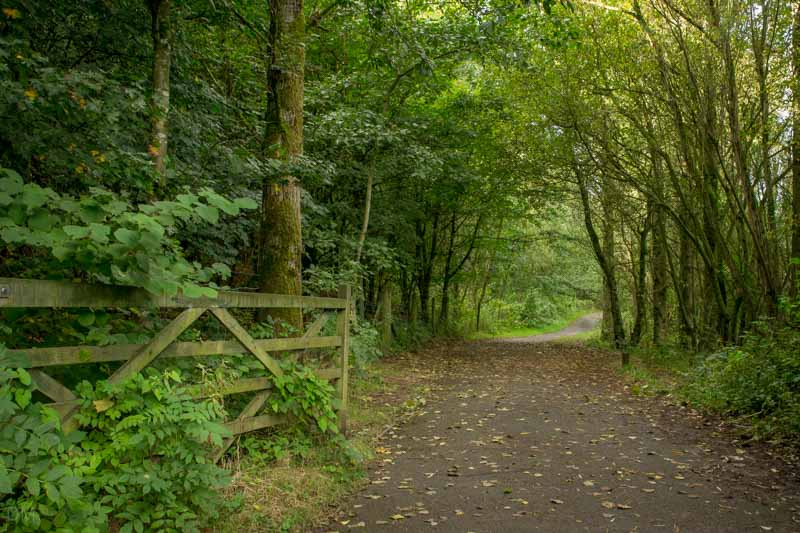 Main Footpath at Cuerden Valley Park - National Cycle Route 55