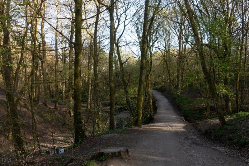 Path through Borsdane Wood, Hindley, Wigan