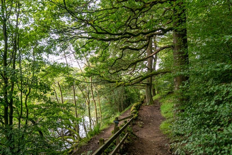 Take the upper path through Grey Heights Wood