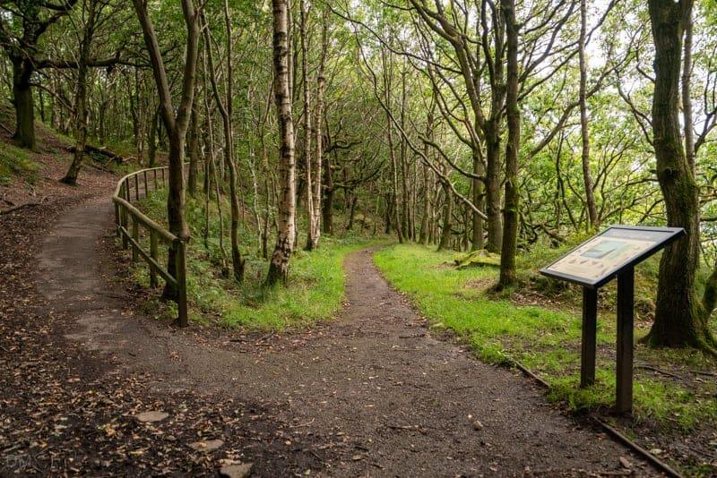 Path down to eastern shore of Anglezarke Reservoir