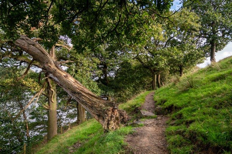 Fallen tree on western side of Anglezarke Reservoir