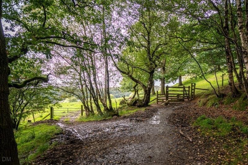 Gate from Spen Wood to Siddow Fold Farm