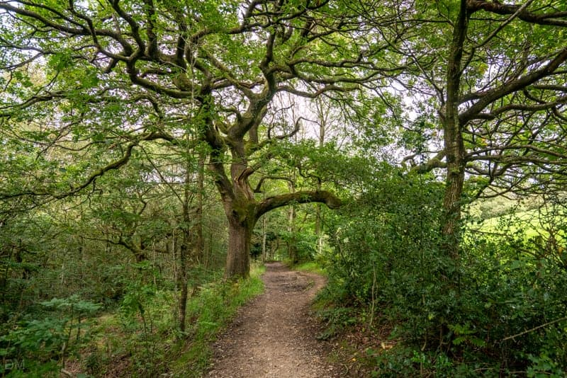 Gorsyfield Wood