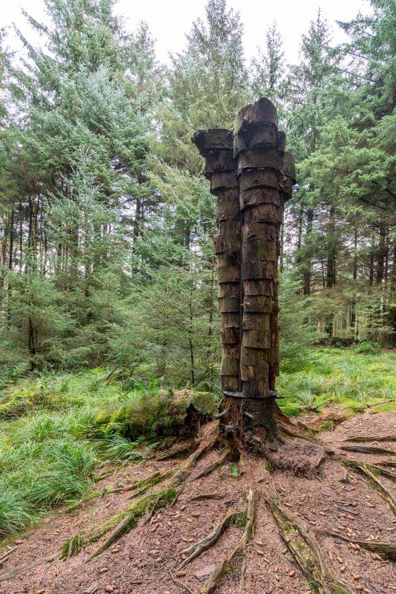 Quaker Tree (Philippe Handford)