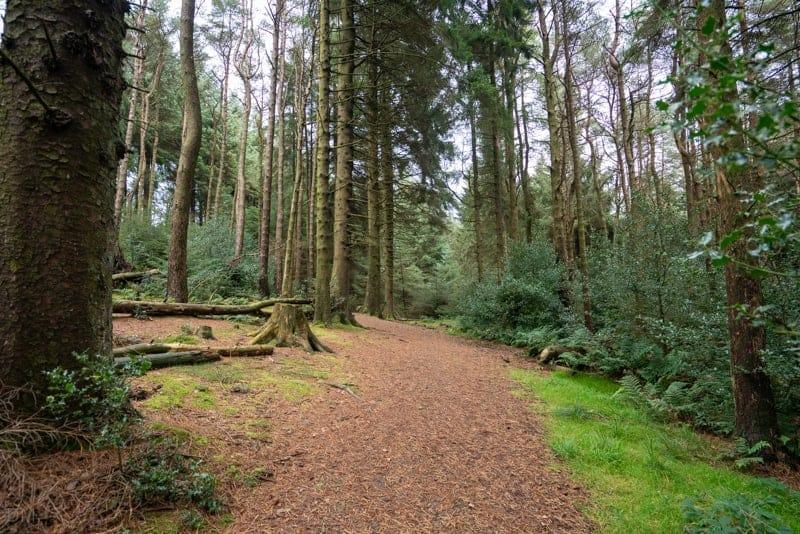 Path through Aitken Wood