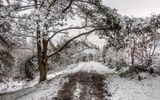 Walker Fold Woods Walk