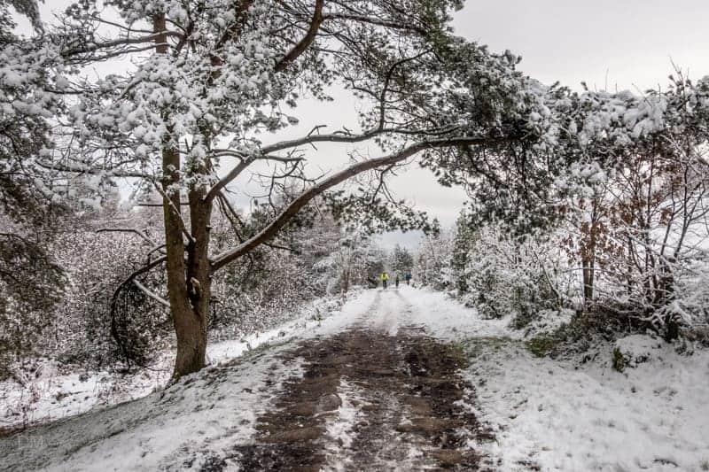 Path through Walker Fold Woods