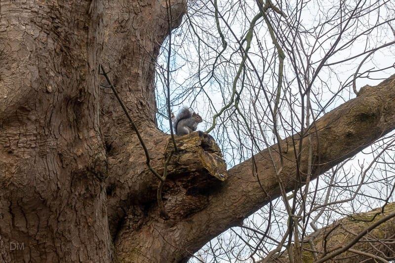 Squirrel sitting on tree branch at Lymm Dam